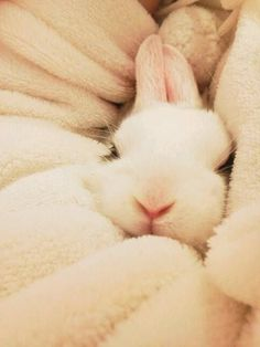 Ideas For Funny Cute Animals Snuggles Funny Bunnies, Baby Bunnies, Cute Bunny, Easter Bunny, Bunny Pics, White Bunnies, Bunny Bunny, Happy Easter, Snuggles