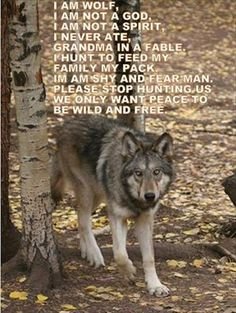 Gray Wolf--Brenda Price and Mary Ann Soto