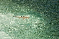 Sharks at Meeru Island Resort, the Maldives, photograph by Karl Robertson Sand Floor, Shark Swimming, What A Beautiful World, Island Resort, Light Photography, Sharks, Norway, Places Ive Been, Vacation