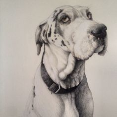 Hounds Of Love - by Nikki McIvor Harlequin Great Dane Coloured pen, coloured pencil and acrylic on watercolour paper Love Drawings, Art Drawings, Great Dane Colors, Hounds Of Love, Harlequin Great Danes, Fox Home, Grey Fox, Drawing Artist, Watercolor Paper