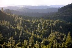 pukenui forest rivers