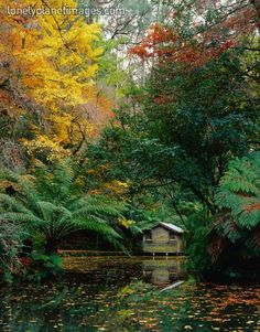 Alfred Nicholas Memorial Gardens in Sherbrooke Forrest, just outside of Melbourne, Victoria, Australia. We picnic here every mother's day!