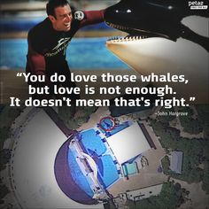 John Hargrove, former SeaWorld trainer. Empty the tanks!! Sick, horrific drilling of their teeth! Orca. Killer whale. Captivity kills. Boycott marine parks. Get the facts. Protect our majestic oceans and sea life! Sustainable world!