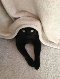 Hiding Spot  Salem: I'm about to run and trip mom again........... NO MUST STOP URGE............. I WILL PREPARED TO BE ATTACKED MOM!