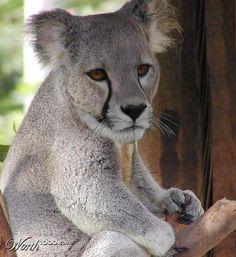 Animal Crossbreed - Worth1000 Contests