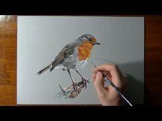 How I draw a robin bird
