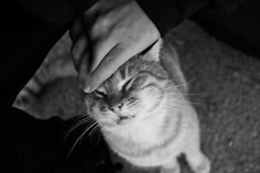 Adorable Animals, Wordpress, Black And White, Blog, Pictures, Photographers, Seasons Of The Year, Animales, Black N White