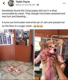 Animal Memes To Kill The Quarantine Time Which Are Impawsible Not To Laugh At Funny Animal Jokes, Funny Dog Memes, Cute Memes, Funny Animal Videos, Animal Humour, Stupid Memes, Funny Pet Quotes, Cat And Dog Memes, Bruh Meme