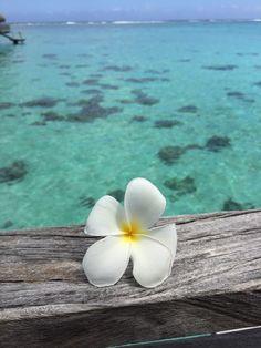 Plumeria Flowers, Beach Flowers, Tropical Flowers, Iphone Wallpaper Vsco, Ocean Wallpaper, Vsco Pictures, Beach Pictures, Tropical Beaches, Tropical Vibes