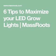 6 Tips to Maximize your LED Grow Lights   MassRoots