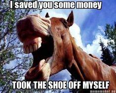 Embedded image Funny Horse Memes, Funny Horse Pictures, Funny Horses, Cute Horses, Funny Animal Memes, Horse Love, Cute Funny Animals, Horse Humor, Crazy Horse