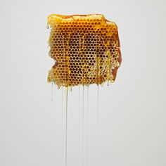 Honey for Cereal Magazine Manuka Honey, Raw Honey, Cereal Magazine, Liquid Gold, Save The Bees, Jolie Photo, Bees Knees, Mellow Yellow, Insects