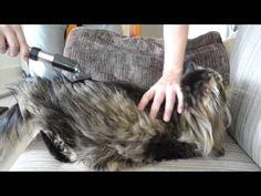Funny Siberian Cat (punch)