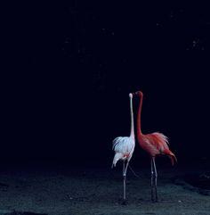 Flamingos by nicole cohen