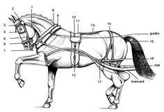 Figure 1. Illustration d'un cheval et des parties numérotées qui composent un harnais léger.