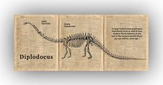 Diplodocus Dinosaur Skeleton over reproductions of old dictionary pages featuring the words Dinosaur, Fossil and Paleontology. Set of 3 pr. Dinosaur Gifts, Dinosaur Art, Dinosaur Posters, History Posters, Dinosaur Skeleton, Dinosaur Nursery, Old Maps, Triptych, Natural History