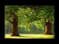 Magie stromů. Které a proč je objímat. - YouTube