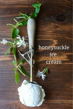 My Honeysuckle Ice Cream is an easy homemade ice cream infused with the delicate flavor of honeysuckle! Frozen Desserts, Frozen Treats, Just Desserts, Sorbets, Flower Food, Wild Edibles, Homemade Ice Cream, Homemade Recipe, Edible Flowers