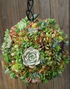 Make your own succulent wreath