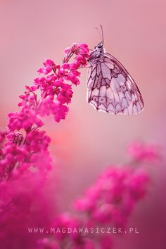 Mania in Botanical Style by Magda Wasiczek Butterfly Photos, Butterfly Wallpaper, Butterfly Flowers, Beautiful Butterflies, Pretty Flowers, Pretty In Pink, Butterfly Kisses, Cute Wallpapers, Wallpaper Backgrounds