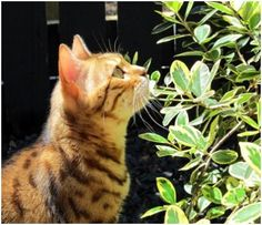 How to Get Rid of Cats in the Garden... On a mission to get rid of the neighborhood cats!!!