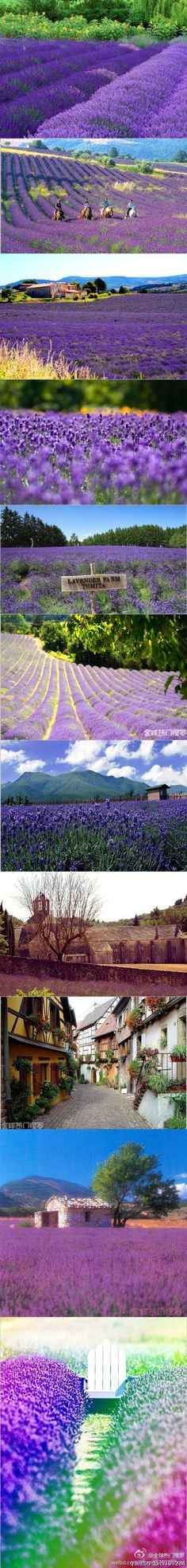 There are locations in New Zealand's South Island that are a purple haze...