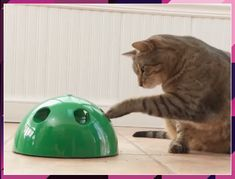 Jumping Activation Ball Animals And Pets, Funny Animals, Cute Animals, Baby Animals, Kitten Toys, Cat Toys, Cute Cats, Funny Cats, Pop Cat