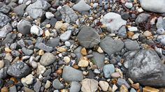 Fossils are becoming more difficult to find at Lyme Regis.