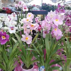 Photo taken at Longacres Garden Centre by Joe M. on 3/2/2013