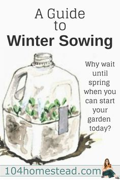 A Guide to Winter Sowing {Starting Seeds in Winter} Winter sowing involves sowing the seeds outdoors in miniature greenhouses during the winter, allowing them to germinate naturally during the spring. Permaculture Design, Organic Gardening, Gardening Tips, Vegetable Gardening, Veggie Gardens, Indoor Gardening, Miniature Greenhouse, Mini Greenhouse, Plantation