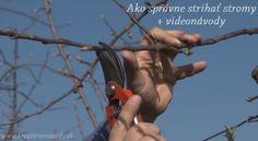 6 videonávodov ako správne strihať stromy na jar
