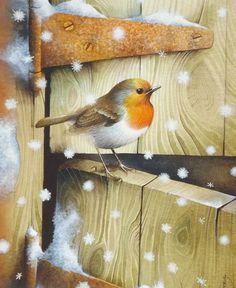 """Dutch Door"" by David Finney - Wildlife Artist & Illustrator All Birds, Little Birds, China Painting, Tole Painting, Illustrator, Christmas Bird, Bird Artwork, Bird Illustration, Bird Pictures"