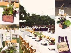 succulent centerpieces as Complimentary Florals or minimal charge