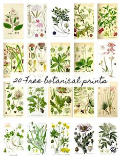 Scientific botanical printables perfect for creating FREE and beautiful wall hangings or large scale art. #printables #botancial #farmhouse #wallart