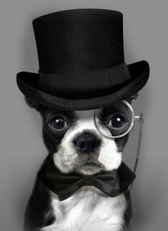 maninpink:  Debonair Dog/ steampunk-bowwow