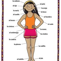 Spanish body parts diagram meanings basic guide wiring diagram 13 best common spanish words images on pinterest learning spanish rh pinterest com human body labeled in spanish human body parts worksheet spanish ccuart Images