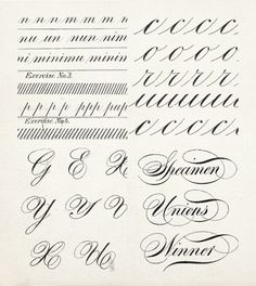 20 + CALLIGRAPHY ALPHABET SPECIMENS | learning calligraphy