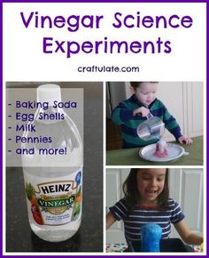 Vinegar Science Experiments! How does vinegar react with various items?!?