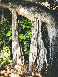 Miami Tree