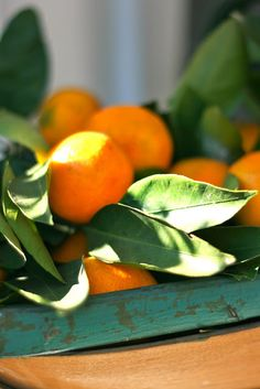 Satsuma Tangerines. I've been eating these daily and they are like nature's candy. Yum!