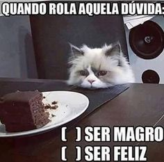 ALGUMAS DECISŌES DO DOMINDO! HEHE :) #petmeupet #domingo #gatos
