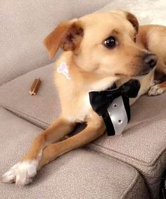 Is there any cuter than Toulouse Grande wearing an actual tux?! We don't think so.  (: Snapchat) by mmagazine
