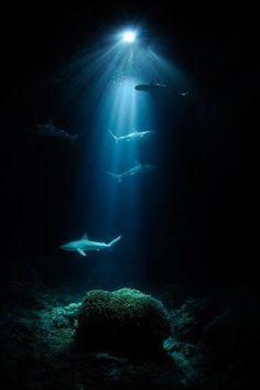 The dolphins swimming under the light makes me think of...