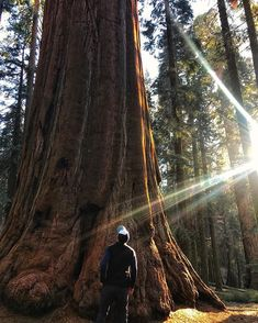 Be still my beating little heart         #sequoianationalpark #generalsherman #giantsequoia #giantsequoias #ilovetrees #parks #lifeisshort #Pinetrees #nationalparks #excursion #noeffect#sequoia #posted #treegugger #socold#wonders #travelwriters #whereami #sequoia #alltogether #beautifulcolors #treescape #getalife#breathtakingviews #nationalpark #reflecting#ilovetrees