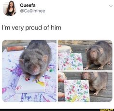 Found on iFunny Cute Animal Memes, Cute Funny Animals, Funny Cute, Top Funny, Cute Rats, Kawaii, Cute Little Animals, Cute Creatures, Animals And Pets