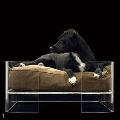 Nice little bed for your Black and White Pooch!