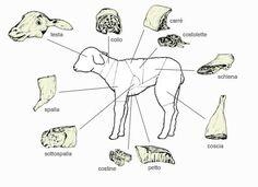 Tagli carne agnello