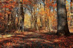 Autumn forest - Pixdaus