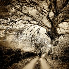 Kingsclere... by mad jeff, via Flickr | monochrome + brown sepia + landscape trees road + iphoneography