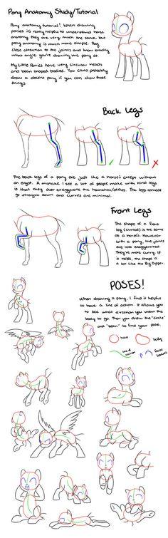 Pony Anatomy Tips/Study/Tutorial by kilala97 on @DeviantArt